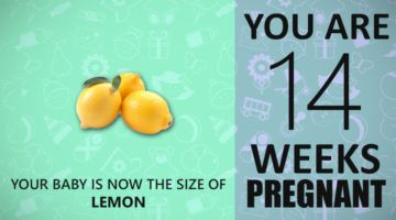 14 Weeks Pregnancy