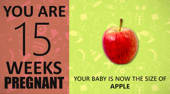 15 Weeks Pregnant Guide