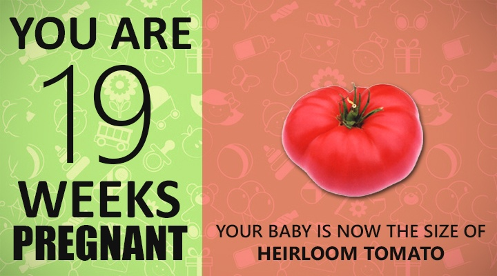 19 Weeks Pregnant Guide
